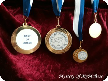 Medals_Cyprus_2019